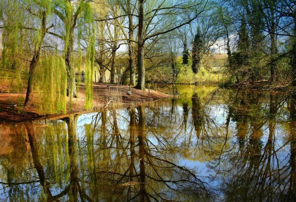 arbre surplombant étang peche carpe