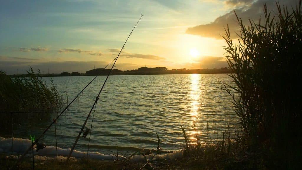 pêche carnassier posé